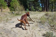 Bringing the stick home