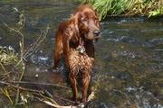 Nugget at beaver dam