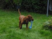 my toy!