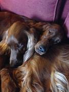 Cuddles !