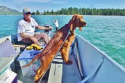Nugget Puppy Lake Davis