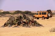 Welwitschia Namibe Desert Angola