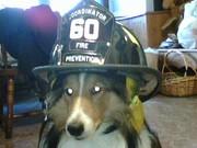 FIRE PREVENTION HARLEE