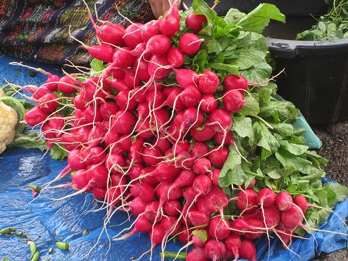 more radishes..