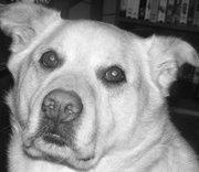 My Dog Gypsy