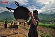 Sapa Harvest