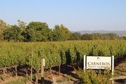 Carneros Vineyards, Napa Valley