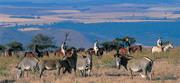 kenya-wildlife-conservancy