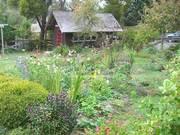 Stanford-Inn-Gardens-Mendocino