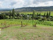 viña cruchon 4-3-2012 001