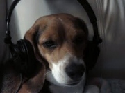 Porthos Listening to music from the FIRE AND ICE TOURNEY.