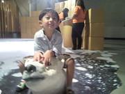 Ride polar bear1