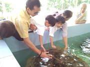 Sea turtle conservation station3.