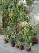 Gardens for Women of Kari in Pakistan