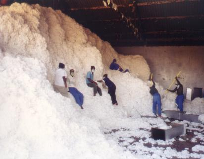 Swaziland workers Cotton Mountain