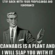 cannabis  slap