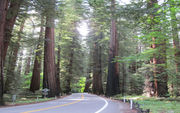The Redwood Corridor