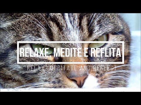 NewAgeMusic: AnimalNature - Video 03