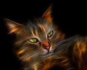 incrible gato