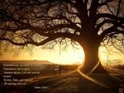 Salmos 39.6y7