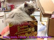 Cat Biscuits.