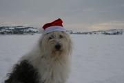 sneeuw en  hond