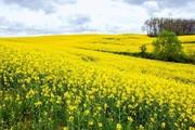yellow france
