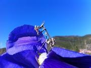 Bidsprinkhaan in Roquebrun