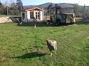 ons kippenhok :-)