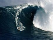 surfer-maui-northshore_26503_600x450