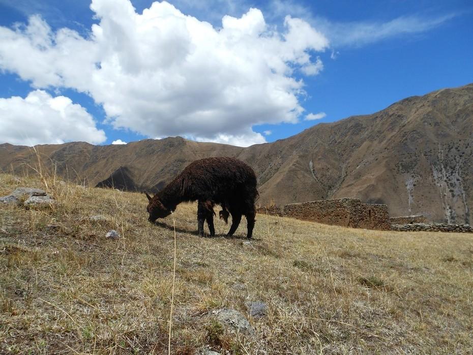 Peru Weaving Words & Women 2016