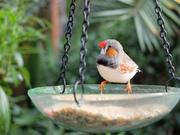 birds of Bloedel Conservatory