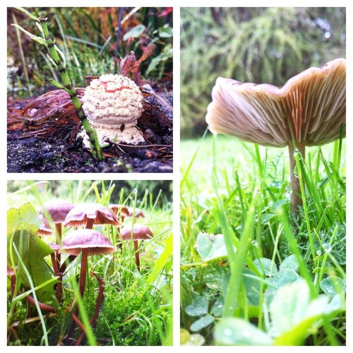 mushrooms at VanDusen