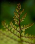 VanDusen flora