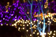 Festival of Lights at VanDusen