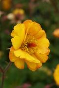 flowers of VanDusen
