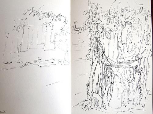 A President's tree