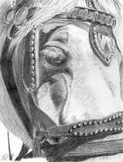 tally horse