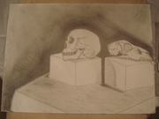 First Human Skull