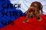 Czech Setters