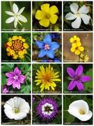 Intro to Flower Essences