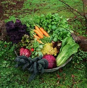 Explore Growing Your Own Food