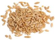 Intro to Soaking Grains
