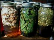 Intro to Herbal Infusions