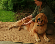 All About Animal Massage