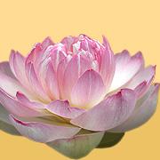 Thai Massage Therapists