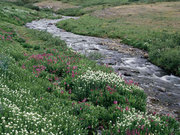 Herbalists: Healing Through Nature