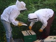 Beekeeping Network