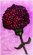 The  carnation  ByMaryLeeParker15