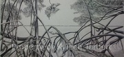 Bird's Eye View Through the Mangroves